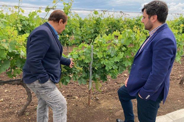 вино, Agrozona.bg