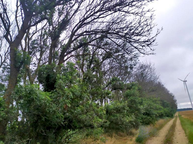 Добруджа, полезащитни пояси, Agrozona.bg