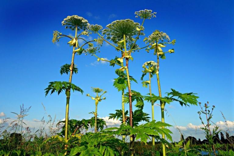 растени, растения, Agrozona.bg