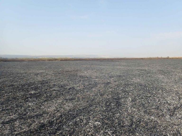 блато, пожар, Agrozona.bg