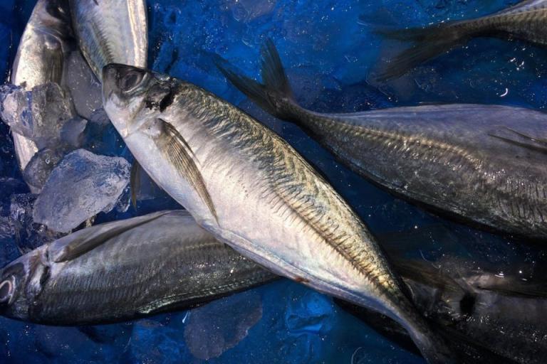 Варна, риба, Agrozona.bg