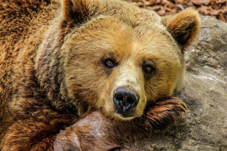 WWF, бракониери, Agrozona.bg